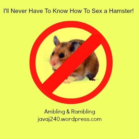 no hamsters